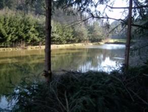 Teichwirtschaft Franken-Forellen